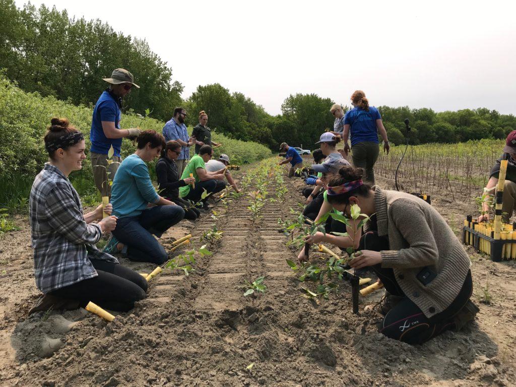 team members planting food